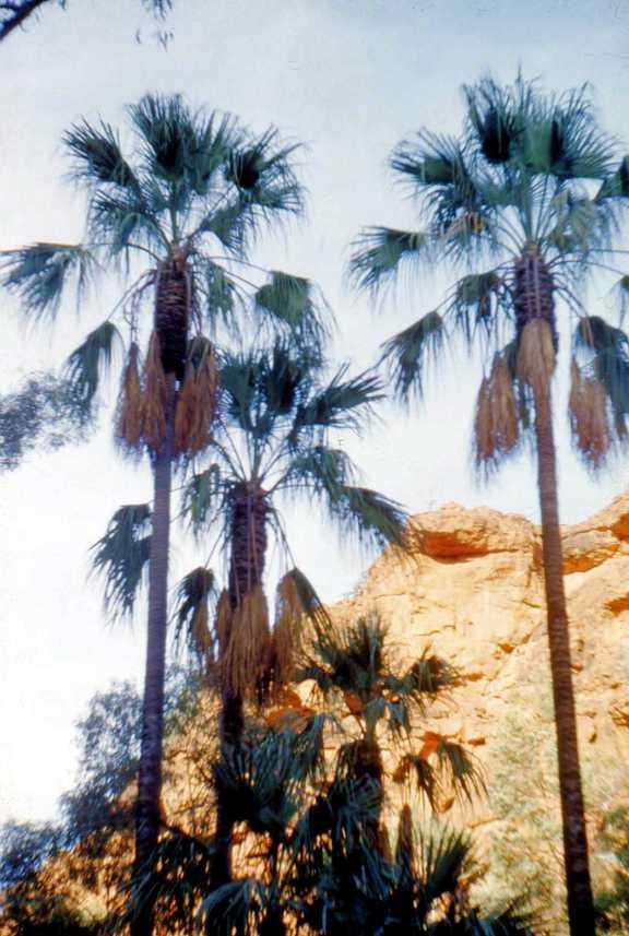 Palm Valley CDTcirca55005-2