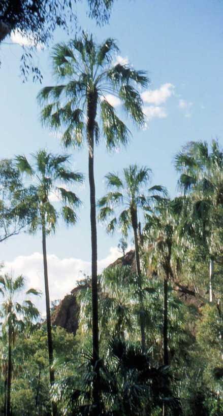 Palm Valley CDTcirca55008-2