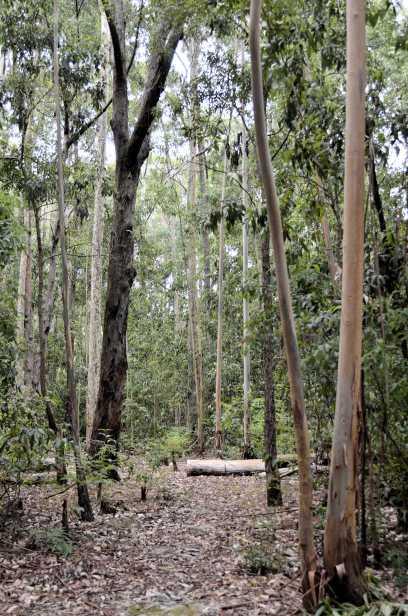 P4-Kuitpo Forest.jpg